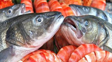 Inilah beberapa ciri ikan yang baik di konsumsi