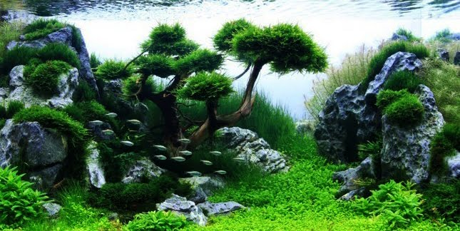 Tumbuhan Yang Cocok Untuk Aquascape